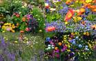 All Colorful Mixes Seed Selection Rainbow Colors Many Choices Wild Flower Blends