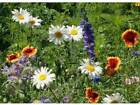 All Perennial Wildflower Mix Seeds (1600 to 5 LB) FREE SHIP Flower Easy Grow 6