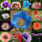 100pcs Mother Of Pearl Poppy Mix Papaver Rhoeas Flower Seeds Mixed Colors Hot