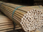 2ft 3ft 4ft 5ft 6ft Good Quality Bamboo Garden Canes
