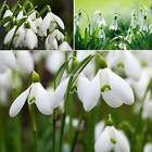 New Adorable Flower Fragrant Seeds Blooms Lily of the Valley Seeds ER99