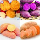 100pcs Purple Sweet potatoes seed Ipomoea batatas Delicious ingredients Organic