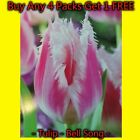Bellsong Fringed Pink And White Tulip Plant Bulbs In Stock Now