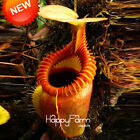 Nepenthes Seeds Balcony Potted Bonsai Plants Seeds Bonsai Carnivorous 50 Pcs