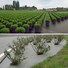 Weed Control Woven Fabric Ground Cover 100gsm Mulch Membrane Mat 1-4M X 4-100M