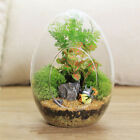 Egg Shaped DIY Moss Micro Landscape Glass Bottle Succulent Plants Vase Home Deco
