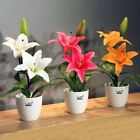 Lily Flower Seed Plants Seeds 10 Seeds Home Garden Balcony