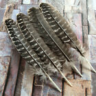 Внешний вид - Wholesale 10/50/100 PCS Precious Natural Turkey Feathers 10-12 inches/25-30 cm