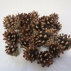 """Lot of 20 Red Pine Pine Cones For Crafts 1"""" to 2""""  CLEAN Craft Supplies"""