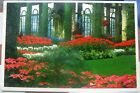 United States Longwood Gardens Poinsettias Pennsylvannia - posted 1995