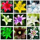 Rare Lily Potted Not Lily Bulbs Bonsai Lilum Flower Outdoor Perennial