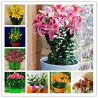 Lily Bulbs Perfume Lily Bonsai Flower bulbs High germination Lilium Bulbs Bulbos