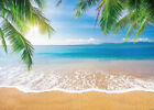 Summer Tropical Beach Palm Backdrop Blue Sky Ocean Beach Themed Party Background