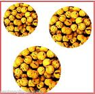 Carp Fishing Cork Balls - Pop up Baits 10mm,12mm or 16mm Boilies / Boilie Insert