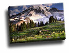 Blooming Wildflowers and Mount Rainier, Washington Canvas Framed Picture