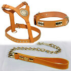 ENGLISH BULL TERRIER HARNESS+ COLLAR+ CHAIN LEAD IN 6 COLORS WITH BRASS FITTINGS