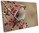Waxwing Bird Wildlife Framed Canvas Wall Art Picture Print