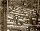 Four Loggers with Downed Trees, Pacific Northwest - 1900 - Historic Photo Print
