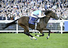 FRANKEL RIDDEN BY TOM QUEALLY 03 (HORSE RACING) PHOTO PRINT 03
