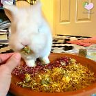 Potpourri with flowers 4 or 8 oz, Bunny Rabbit Guinea Pig Chinchilla Food Treats