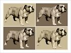 Bulldog Pop Art Print Poster - s558