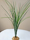 """Artificial Aquarium PLANT w/ STONE BASE MD. 16"""" Tall SPIKE WEED (color options)"""
