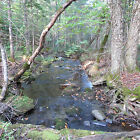 OWN 33 ACRES + - IN NORTHERN MAINE***