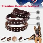 Pet Dog Real Leather Collar Premium Genuine adjustable Strong Brown M L XL