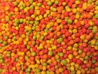 Zupreem Fruit Blend breeder M tiel pellet Bird Food Conure cockatiel fruitblend
