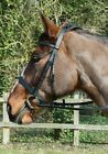 Windsor Leather Hunter Bridle with Wide Cavesson Noseband BLACK  Pony BNWT