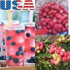 USA SELLER Pink Lemon-aid Blueberry 25-100 seeds
