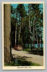 Minnesota State Tree Norway Red Pine Chevy Corvair Greenbrier Van Postcard 1962