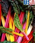 USA SELLER Norther Lights Swiss Chard 25-200 seeds HEIRLOOM NON-GMO