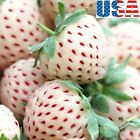 USA SELLER White Soul Strawberry 25-200 seeds HEIRLOOM NON-GMO