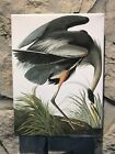 "Audubon ""GREAT BLUE HERON"" Bird Wood Stretched Full Color Art Canvas Print New"