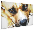 Staffordshire Bull Terrier Box Canvas and Poster Print (661)
