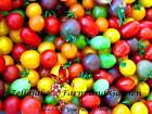 Rainbow Cherry Tomato Mix Seeds Sizes up to 1 4LB Bulk Heirloom Colors Blend 94