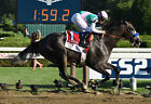 ARROGATE 31 RIDDEN BY MIKE SMITH (HORSE RACING) KEYRINGS-MUGS-PHOTO PRINTS