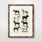 VINTAGE HORSE BREEDS CHART ART PRINT Countryside Poster Equestrian Wall Farmer