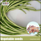 Chinese Vegetable Seed Bean Long Beans Seeds For Home Garden 20 Particles NEW S