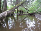 ***OWN 49 +/- ACRES IN NORTHERN MAINE***