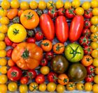 Tomato Seed Catalog List Pick Your Packets from a Huge Selection of Heirlooms
