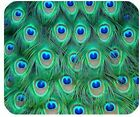 Colorful Peacock Feathers Personalized Rectangle Mouse Pad,Gaming Mousepads