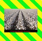 Cotton Seeds 2300 for $17.99 ~~Free Shipping. ~~Other Quantities In My Store~~