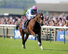 FRANKEL RIDDEN BY TOM QUEALLY 13 (HORSE RACING) PHOTO PRINT
