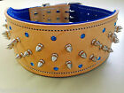 Natural Leather & Blue Studded Suede Dog Collar & Crystals & Nickel Fittings