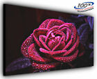 Wet Rose Panoramic Canvas Print Modern Art 4 Sizes to Choose Ready to Hang