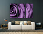 Flowers,Rose,Nature,Huge canvas print, wall art decor,multiple panels available
