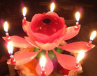 Musical Candle Flower Lotus Blossom Birthday  Party Decoration Double-deck