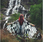 US Fashion Christmas Festival Butterfly Wing Printed Shawls Party Costumes Cape